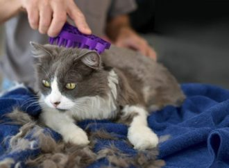 Cat And Kitten Grooming